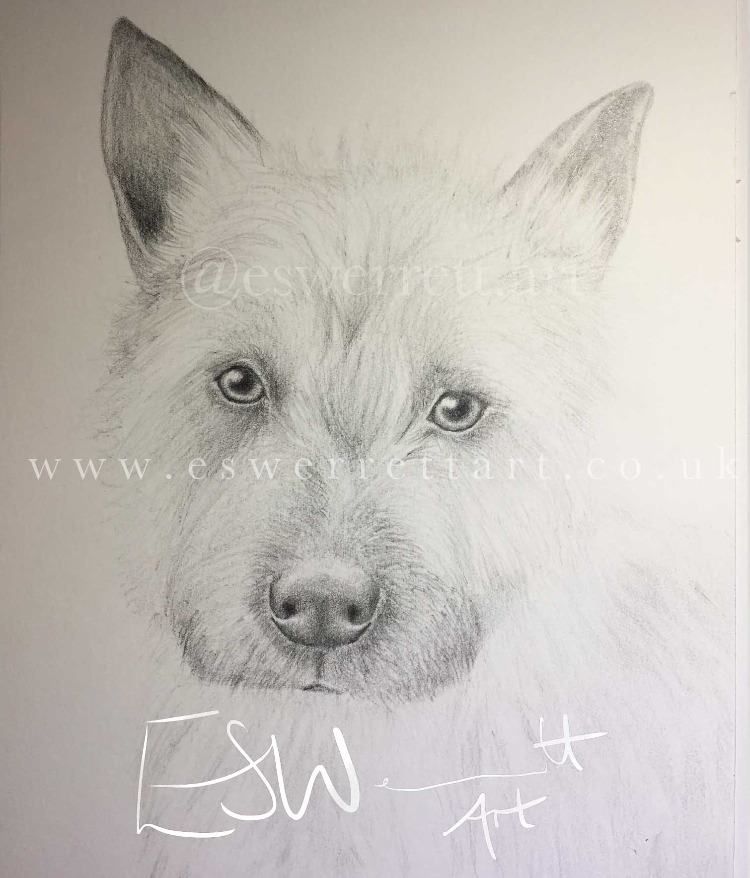 Dog Graphite Pencil Drawing