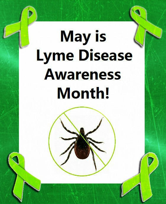 One small bite could potentially effect you for the rest of your life.  Lyme disease is difficult to diagnose, and unfortunately there is no cure for it. Cases of Lyme disease have been reported in every state, and on every continent except Antarctica. Early symptoms include fever, chills, headache, fatigue, muscle and joint aches, and swollen lymph nodes. 70-80% of people will also develop a rash at the site of the tick bite 3-30 days (but usually around 7 days) after the initial bite.  After spending time outdoors, especially after hiking, or being in a wooded area, always check yourself, your children, and your pets, from head to toes (or paws), and shower immediately afterward. Wearing light colored clothing, with long sleeves and long pants, as well as shoes, rather than sandals or bare feet, can be very helpful in preventing ticks from getting on you.  Getting your property treated for ticks will greatly lower you and your loved ones chances of encountering any of these Lyme disease carrying pests. Fill out the form on our website, call (860) 477-4189, or E-mail us at safesidetreatments@gmail.com for a free estimate. Follow @safesidetreatments on Instagram and Facebook, and @SafesideT on Twitter.