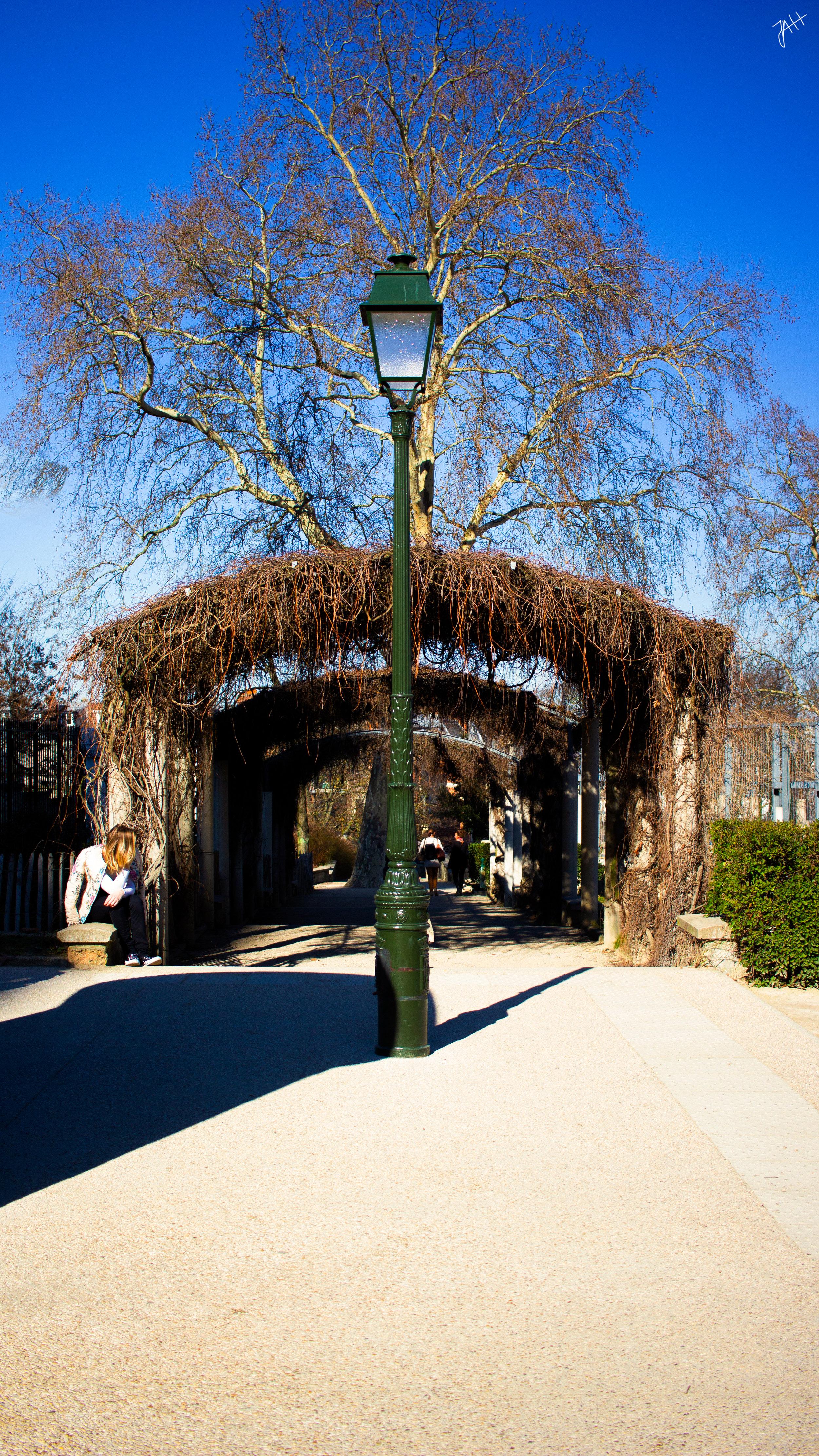 Paris-tree.jpg