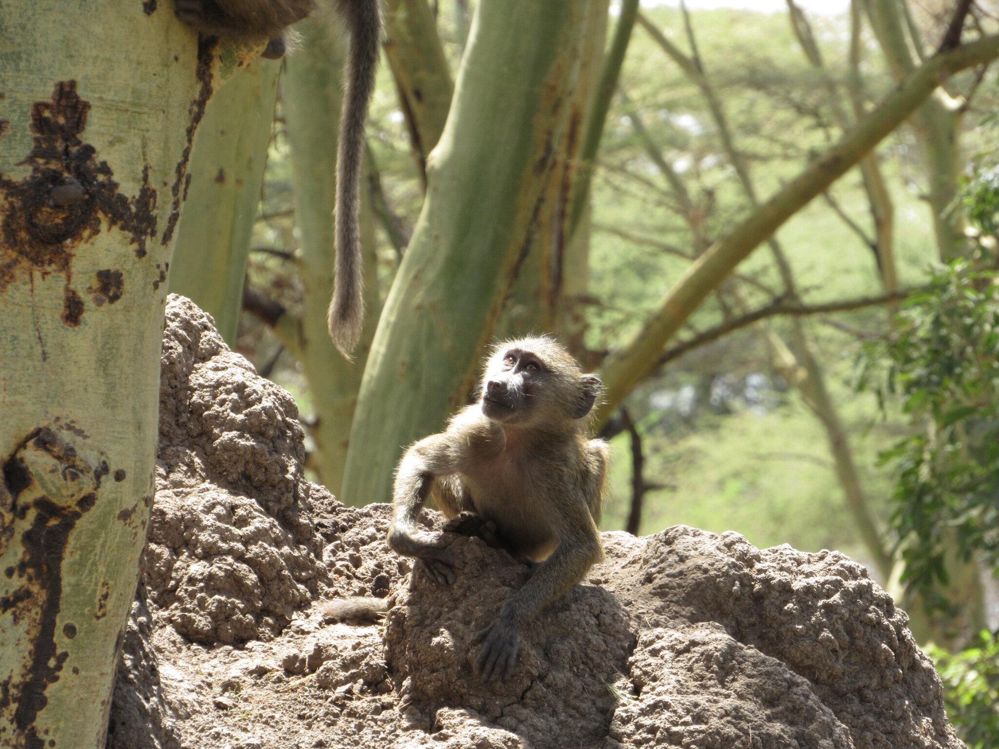 Tanzania Introduction & Lake Manyara National Park -