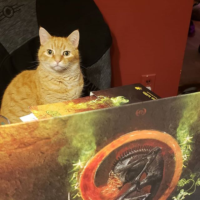Had a great day with Sharang Biswas and Intramersive Head Writer @whitelywanton #devising plans to bring his #games to life on the #northshore. But we forgot to take pictures so here's my friends cat, Dario, DMing our #Callofcthulu table.  #badatsocialmedia #immersivetheater #salem #immersive #creativecollectivema #creativenorthshore #larp #livinggames #larptheater #playabletheater #play #feast #piercefarm #catsofinstagram
