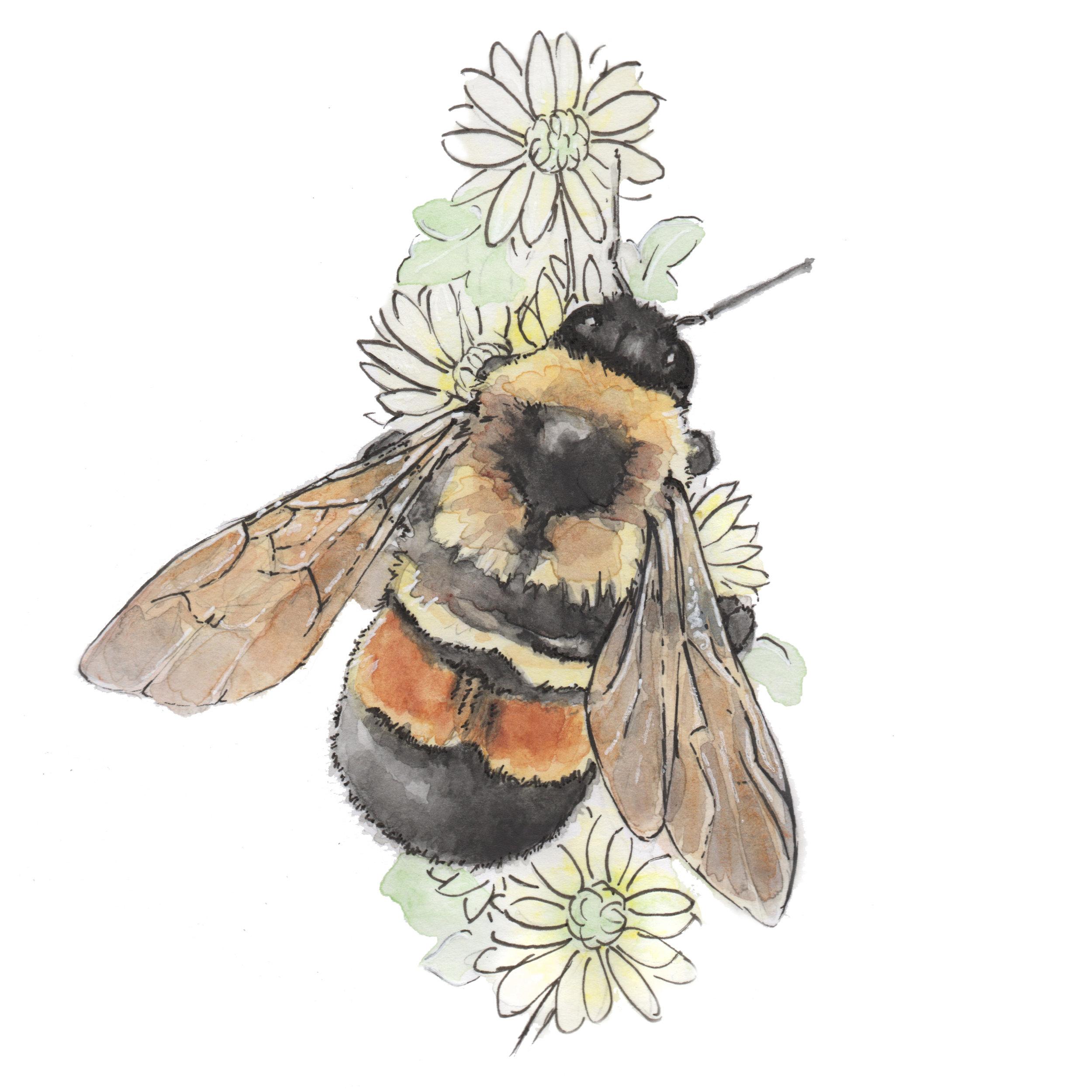 Bee_final1.jpg