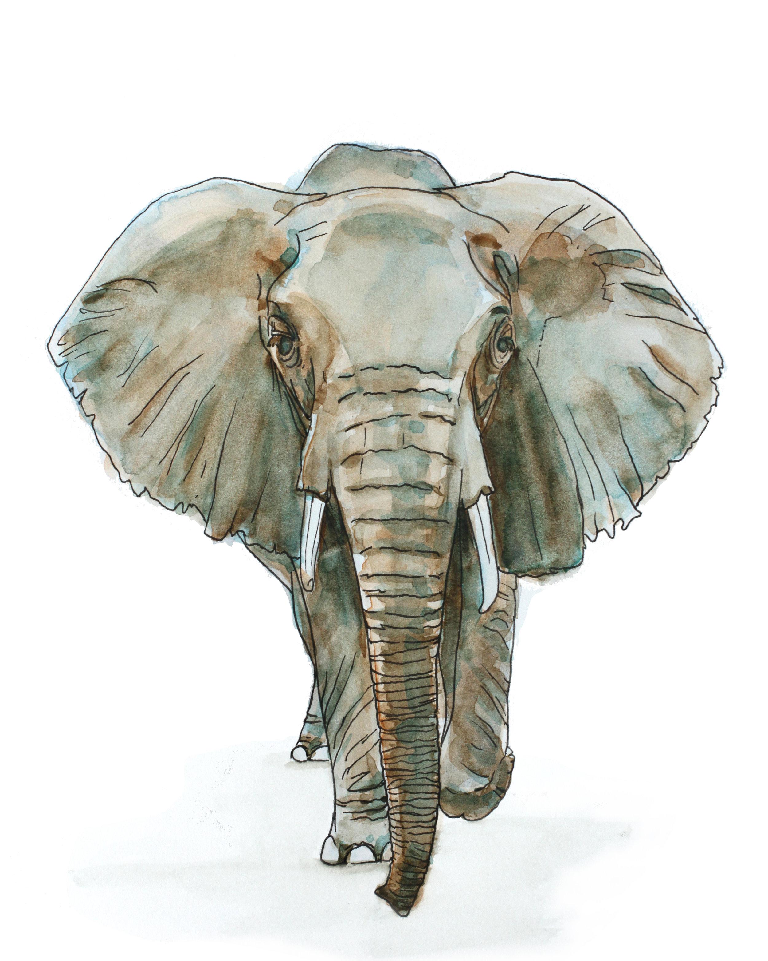elephant 8x10_1.jpg