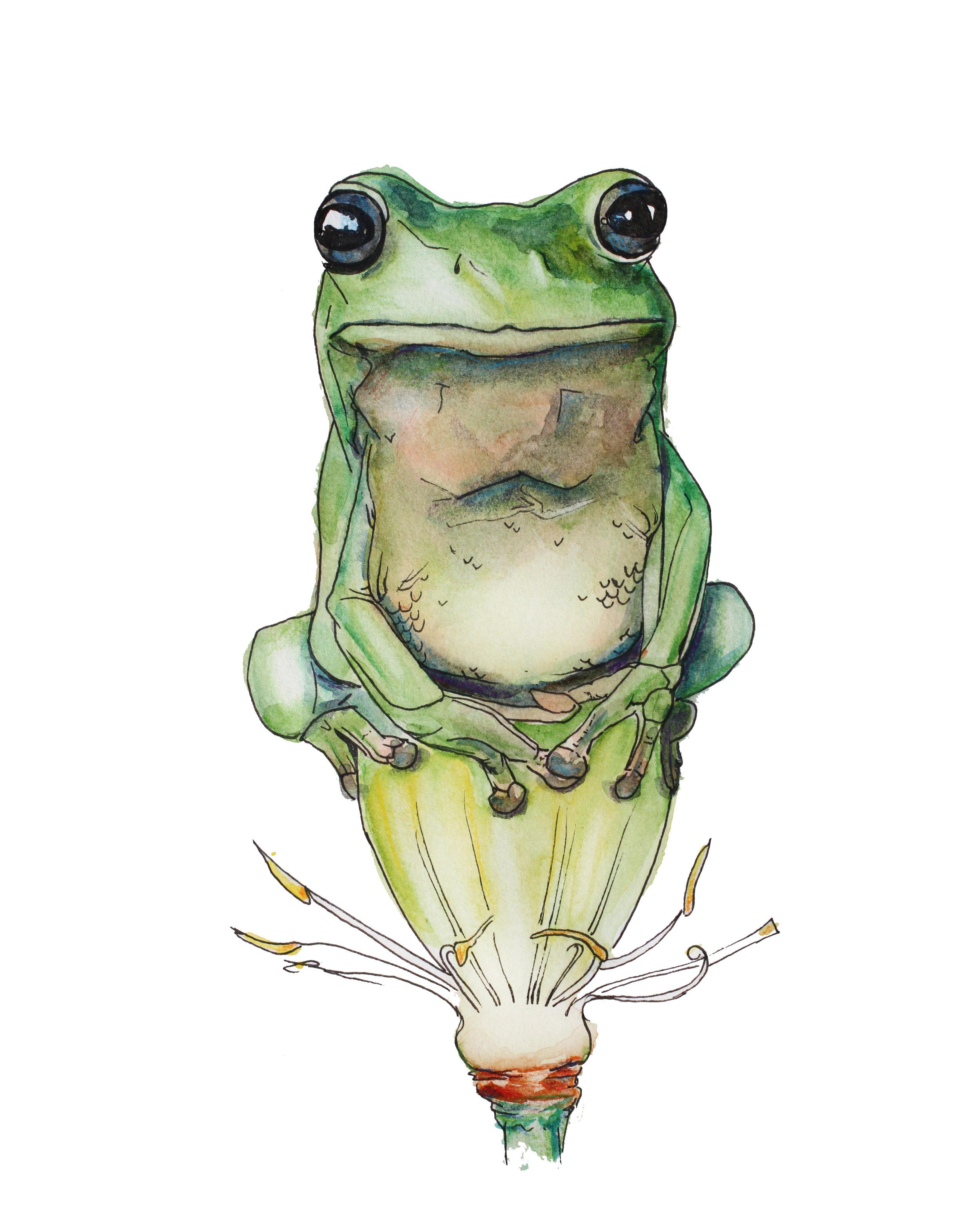 frog 8x10_1.jpg
