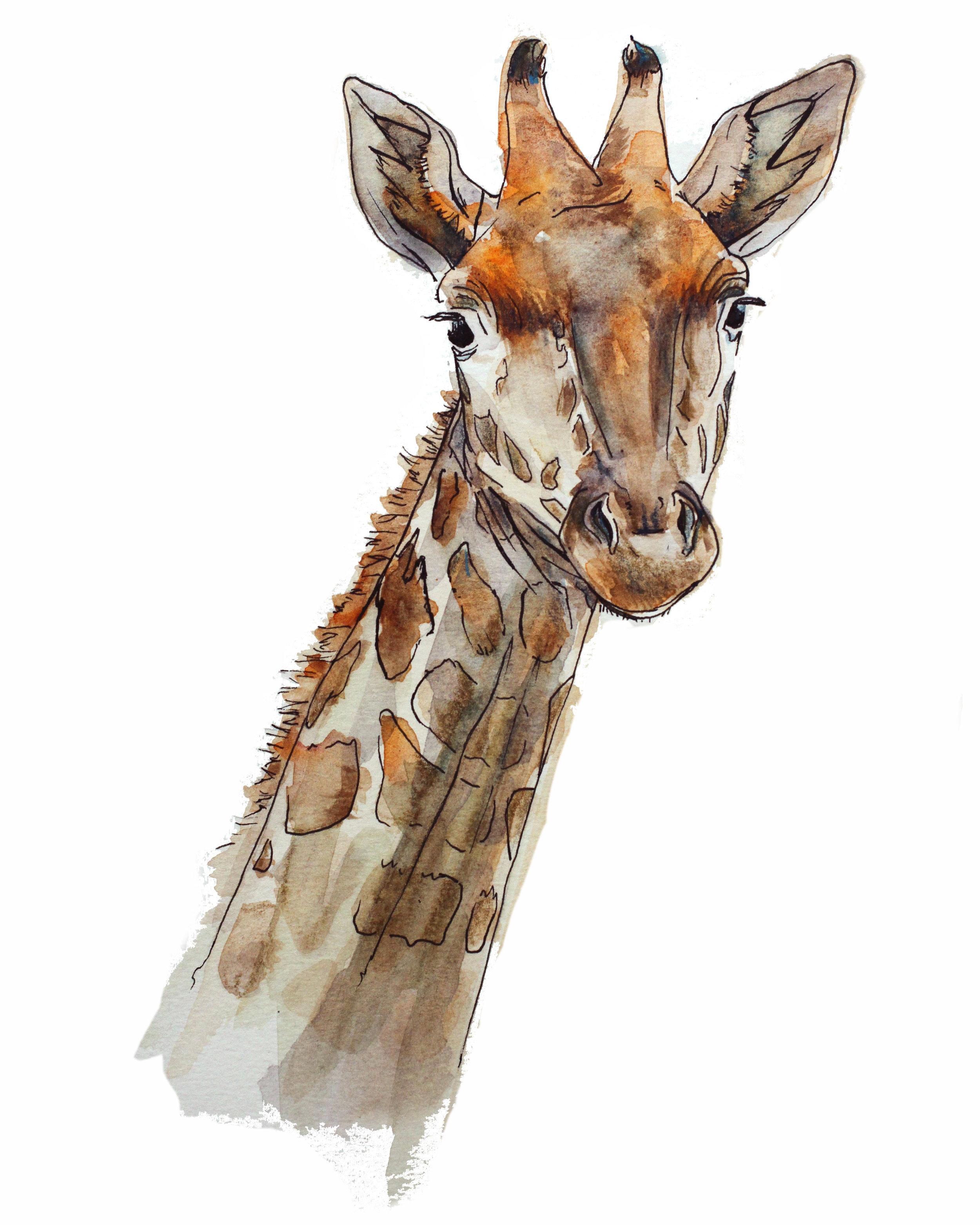 giraffe 8x10_2.jpg
