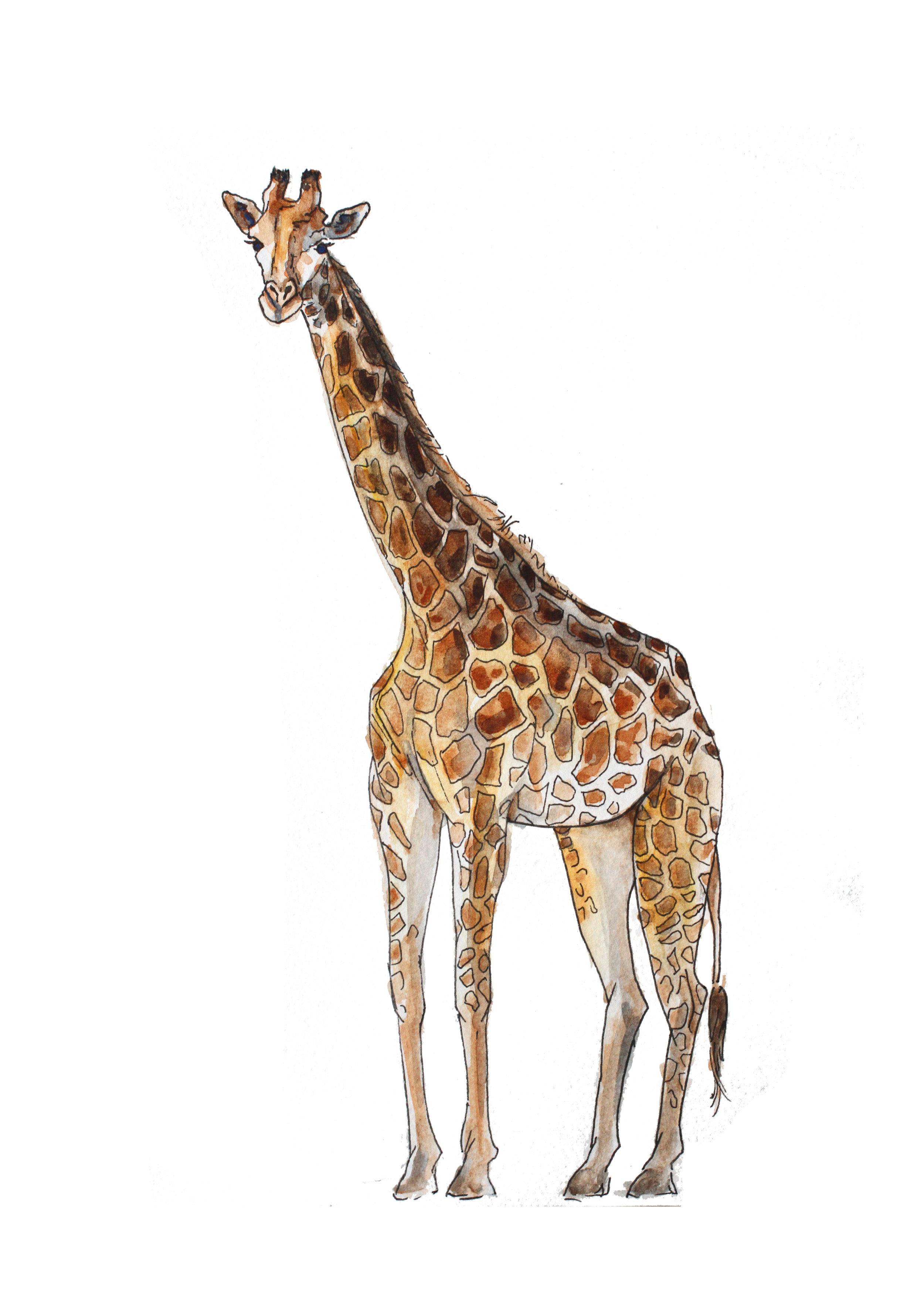 Giraffe2 5x7_1.jpg
