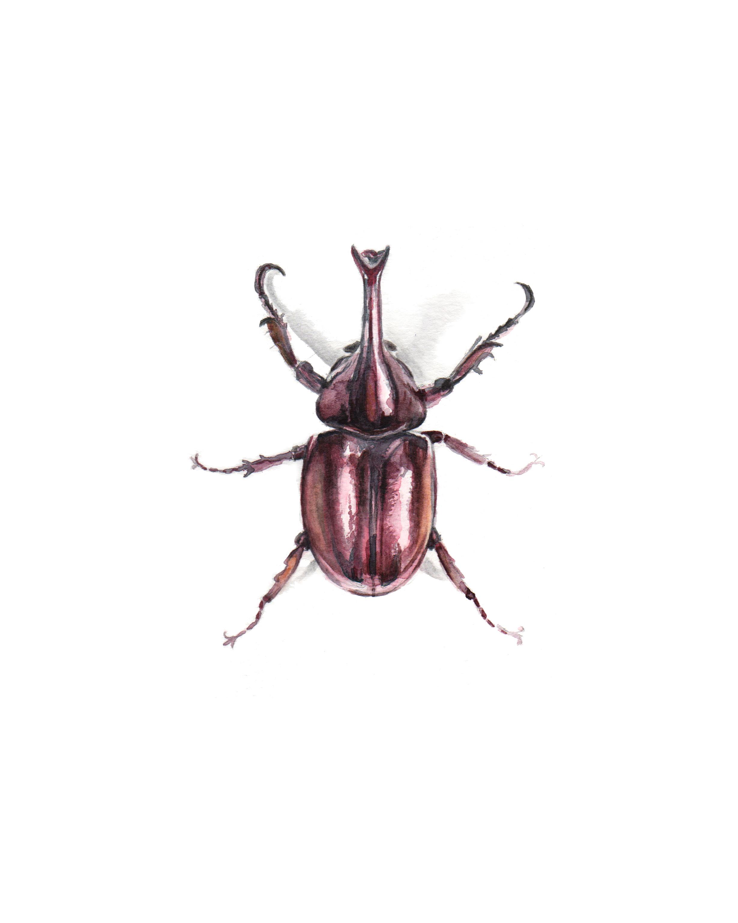 Beetle_space.jpg