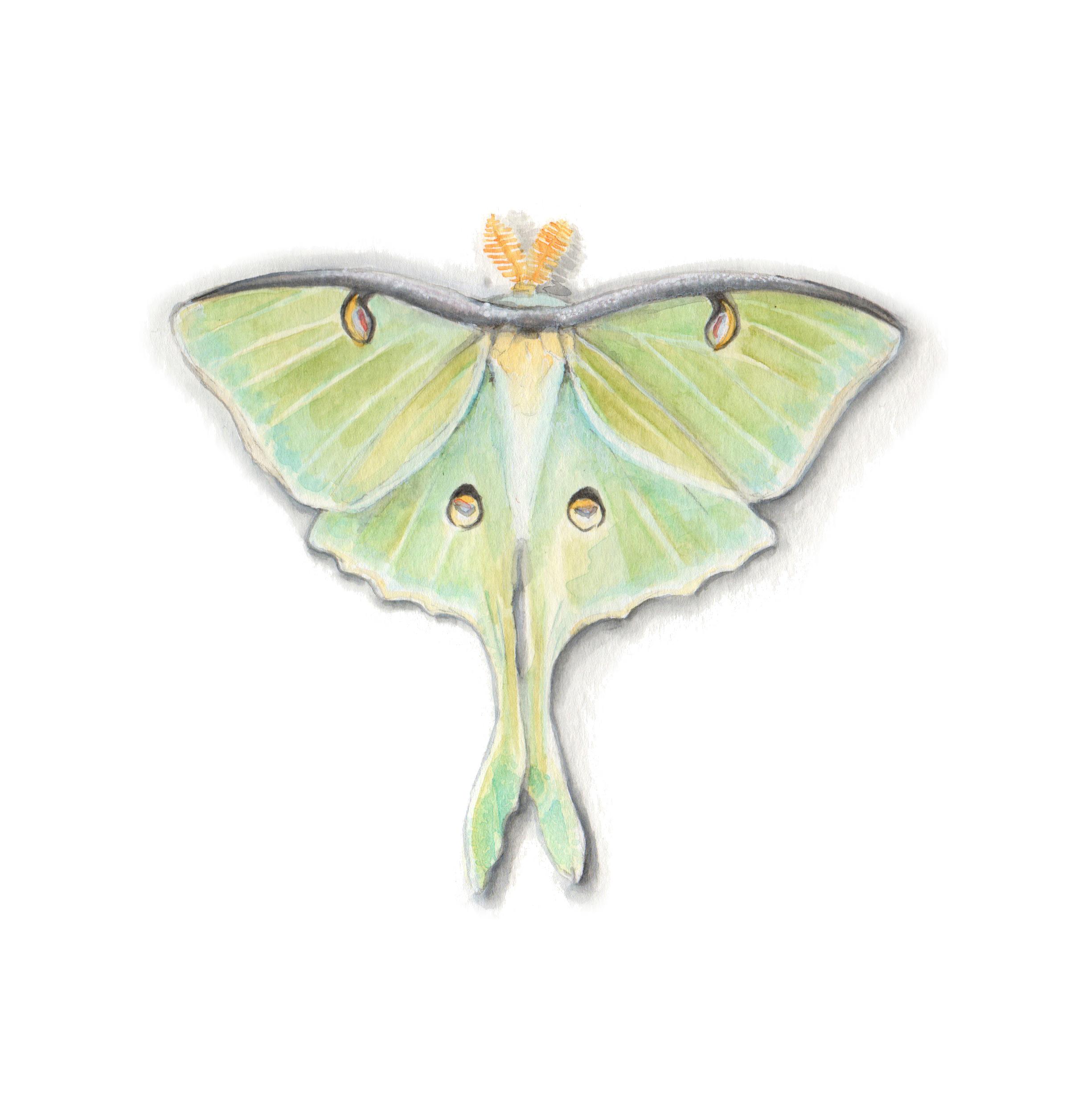 luna moth space.jpg