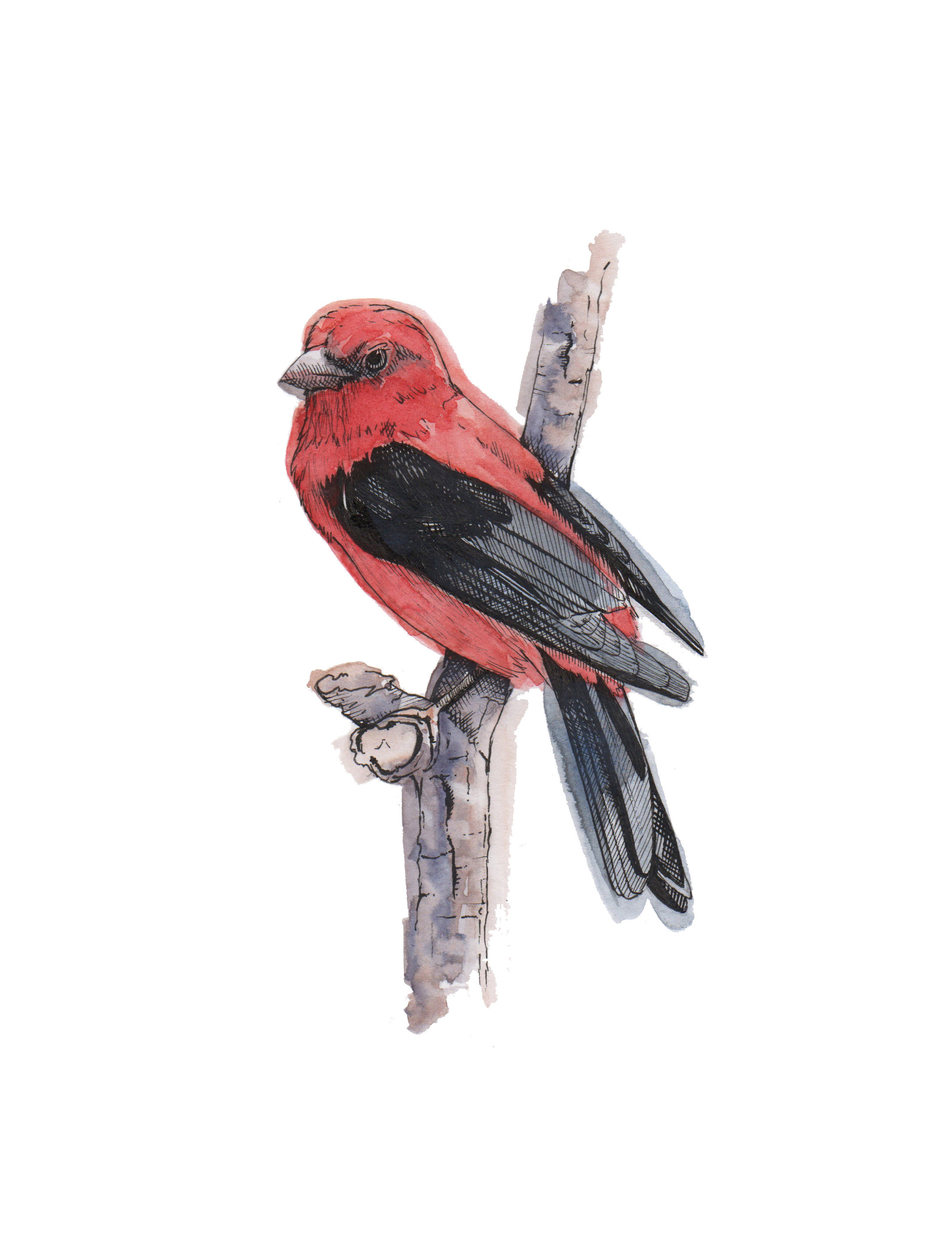 Tanager_color_space2.jpg