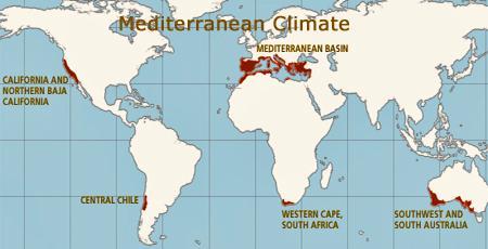 mediterranean climates.jpg