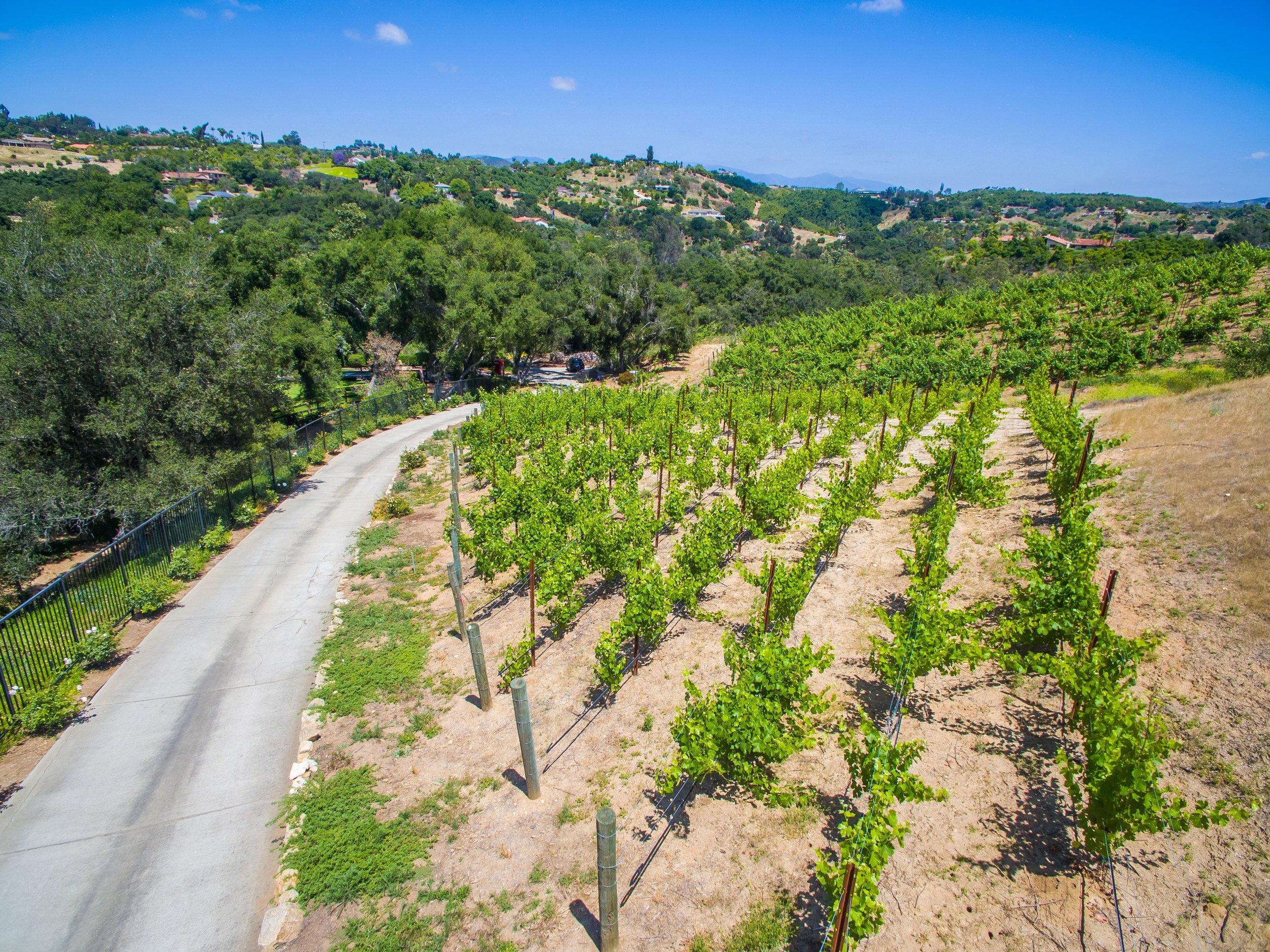 089_Aerial Vineyards.jpg