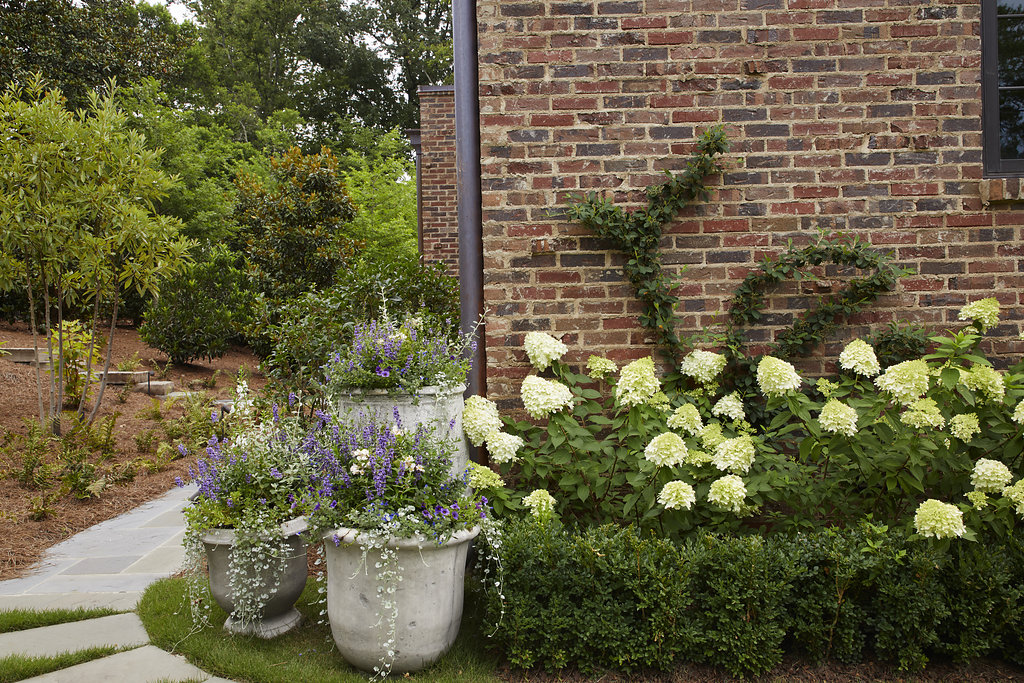 Flower pots and flower bushes in front of the brick home with vine climbing up the wall.