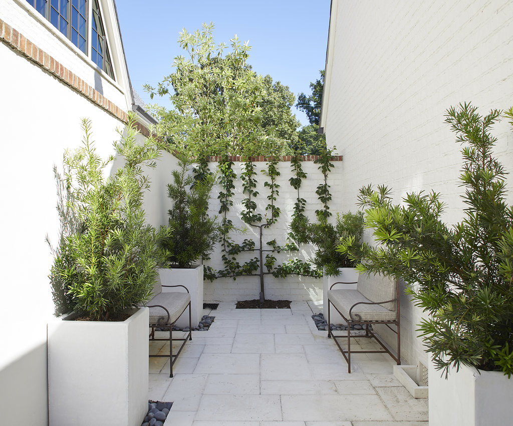 View of sitting area with vines climbing up the white wall, custom pots and shrubbery.