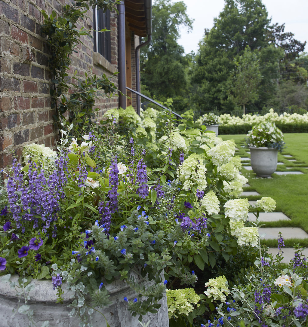 Sprigs of lavender inside of a custom made planter and flower bushes lining a walkway.