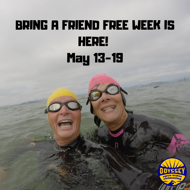 Bring a Friend Free Week Odyssey Open Water Swimming.png