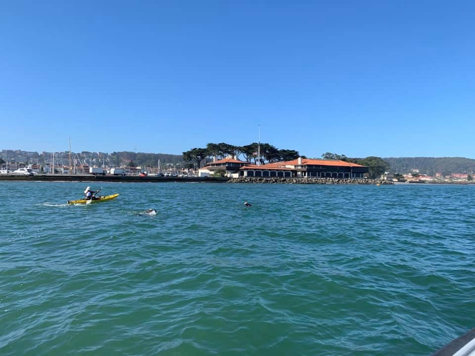 Close to Shore Alcatraz Swim