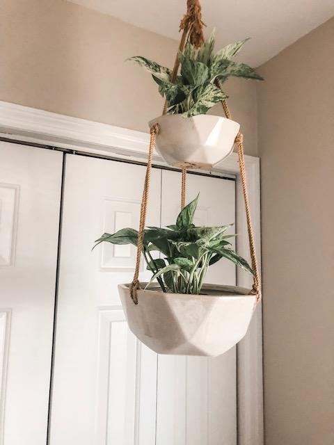 charleston house plants