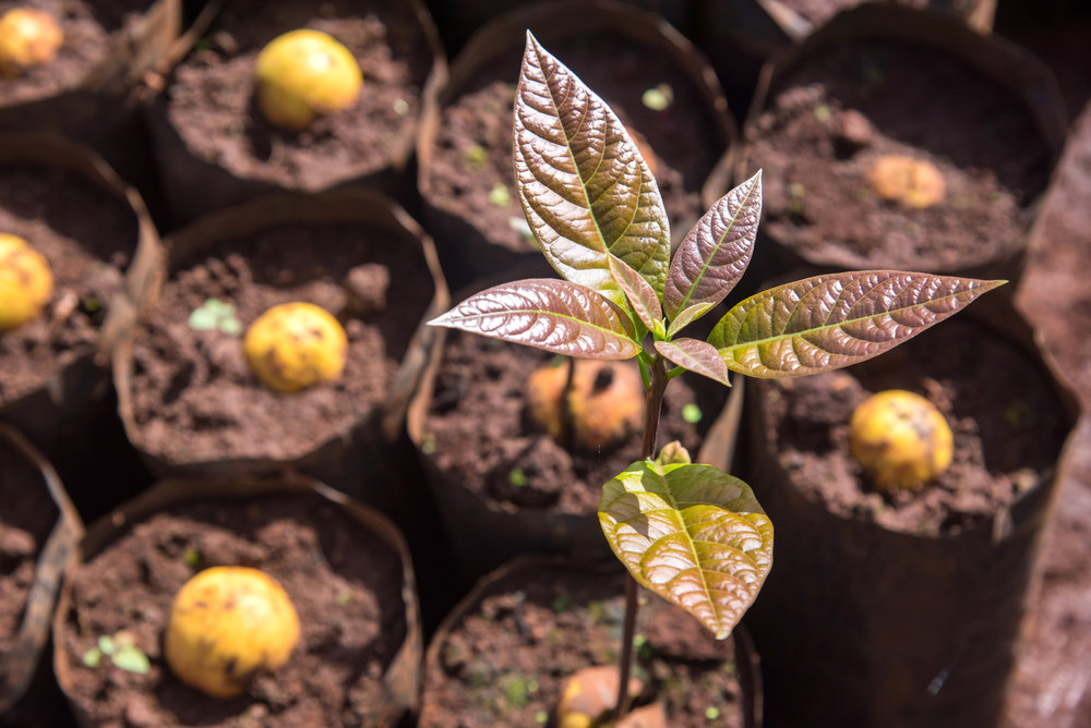 REGULATED INVESTING - AVO Oro Verde provides the only regulated way to invest in avocado orchards in Mexico. We seek to create a positive environmental, social, and economic impact by bringing together investors and sustainable avocado producers.