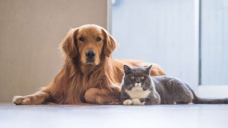Dogs,Cats, Birds & Fish - Are you going out of town, working long days, have an emergency?Do you need your pet played with, fed, water refreshed, litter box refreshed, puppy pads changed, given medication or just want a companion for your pet while you're busy? You are in the right place!