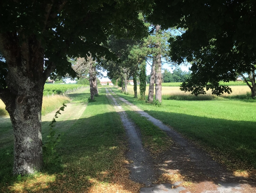 The beautiful tree-lined path at La Cannonerie where we stayed in France.