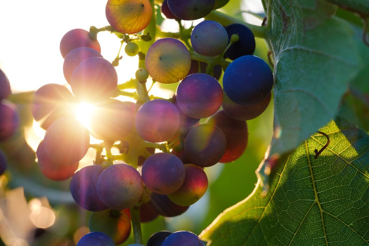 grapes-3550742_1280.jpg