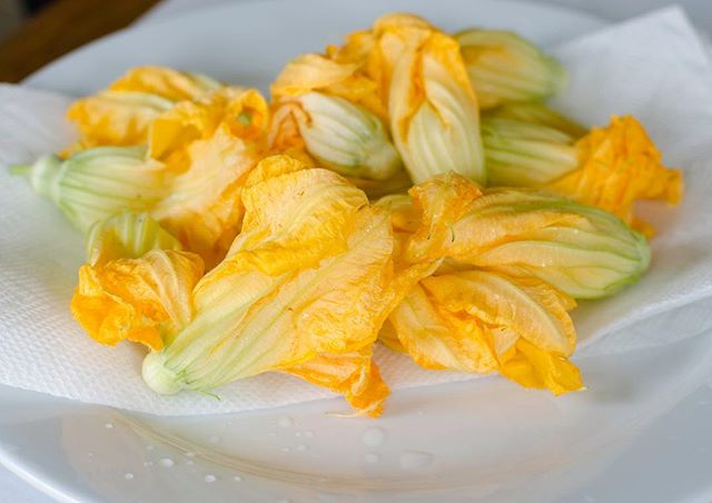 Squash blossoms are one of the most delicate and aesthetically pleasing food vessels.  A very limited amount of these are occasionally available throughout the long squash season. Typically coming from zucchini but also summer and winter squash blossoms are sometimes large enough to stuff and/or fry.  If nature allows, these will be on the menu in October. The presentation is delightful and the flavor delicately resembles the squash.  #stuffedsquashblossoms #foodporn #diadelosmuertos #celebracion #truckee #mountainculture #garden #gourmetkittyproductions