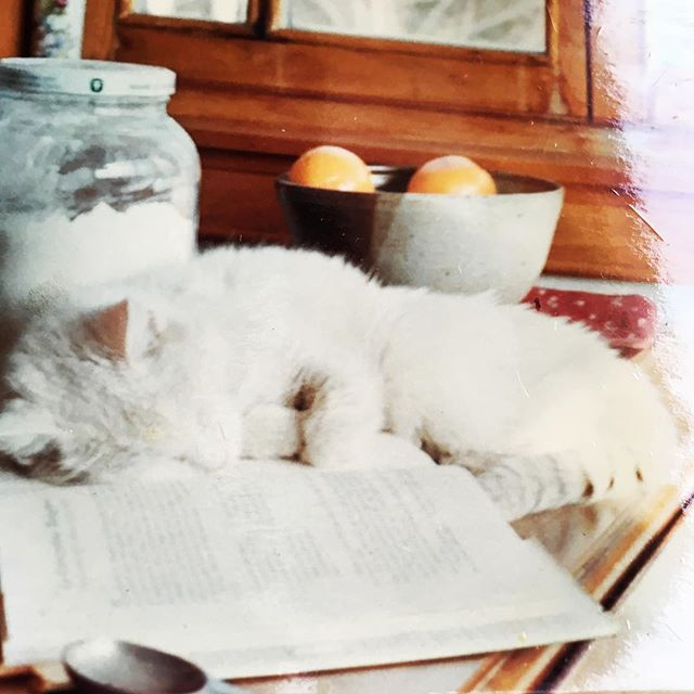 Today is national cat day and I need to acknowledge the OG gourmet Kitty, my family cat from growing up. May I present to you, the one and only, Kitty! Kitty was snow white and silky soft. She was a fixture in our kitchen for over twenty years. When developing Gourmet Kitty Productions, I wanted to have a name that transcended every culture and kitchen around the world. The house cat and alley cat alike have been reaping the benefits of kitchen scraps and warmth as long as anyone can figure. Here's to our feline kitchen companions in all corners of the globe!!! @gourmet.kitty.productions #cat #kitty #9lives #kitchen #icon #foodislife #meow #popupdinner #truckee #tahoe #foodscene #honoryourkitty #memories #chef #foodie #joyofcooking #recipes