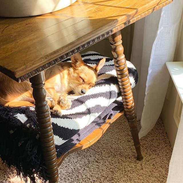 Happy Monday! Today's goal - snooze in the warmest and sunniest spot possible. (See also: tomorrow's goal). 🐕☀️😎#mondaygoals #vintagefurniture #spoollegs #sidetabledecor #dogsasdecor #crimsonandoakdesigns #paintedfurniture #mondaymood #dallasfurniture #shophelper