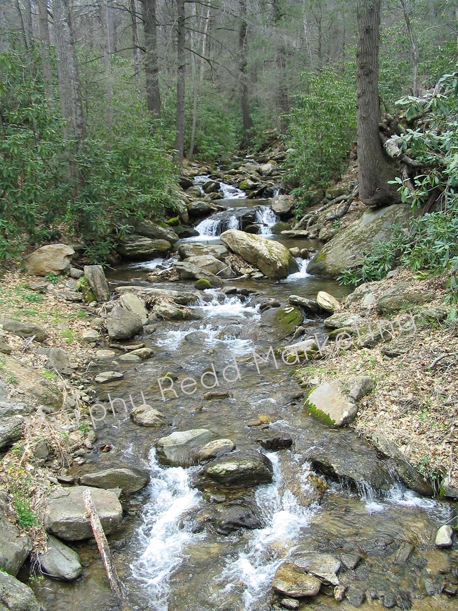 North Carolina Stream