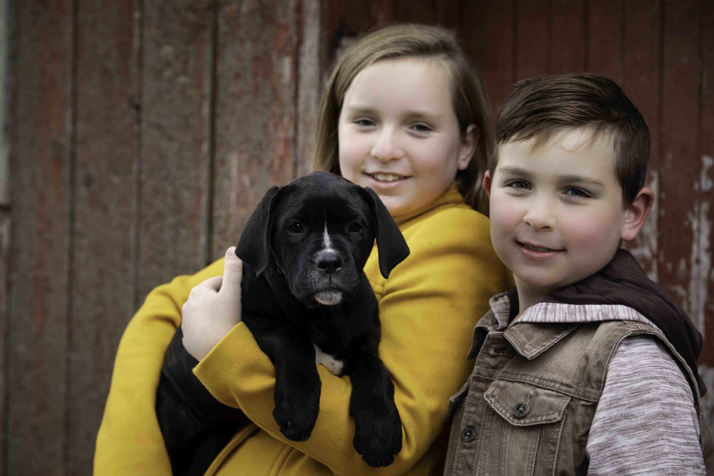 Jodie-Aldred-Photography-Chatham-Kent-Elgin-Middlesex-London-Ontario-Farm-Family-puppy.jpg