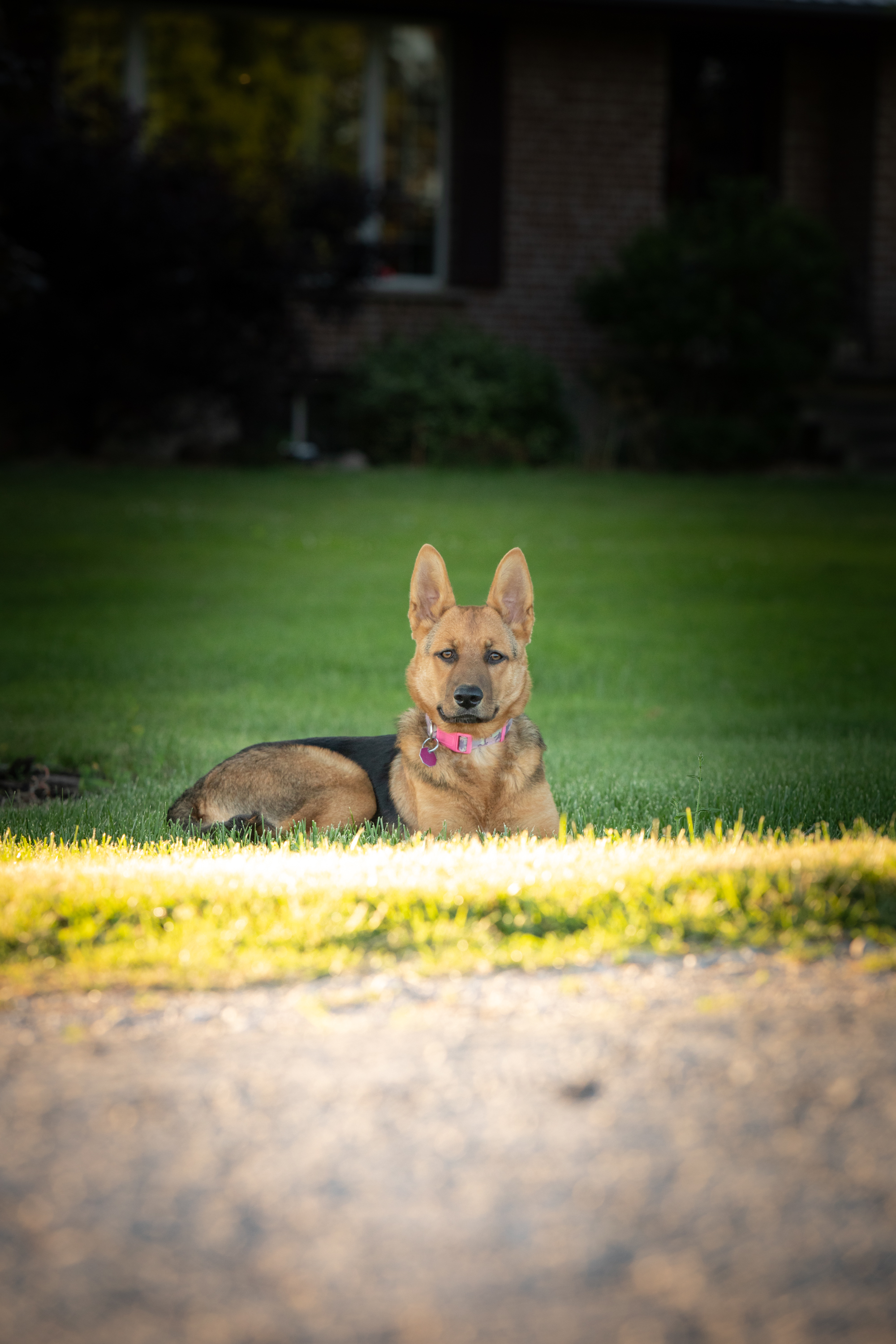 country-agricultural-photographer-Family-group-Jodie-Aldred-Photography-Elgin-Huron-Middlesex-Family-country-rural-London-Ontario-Dog-pet.jpg