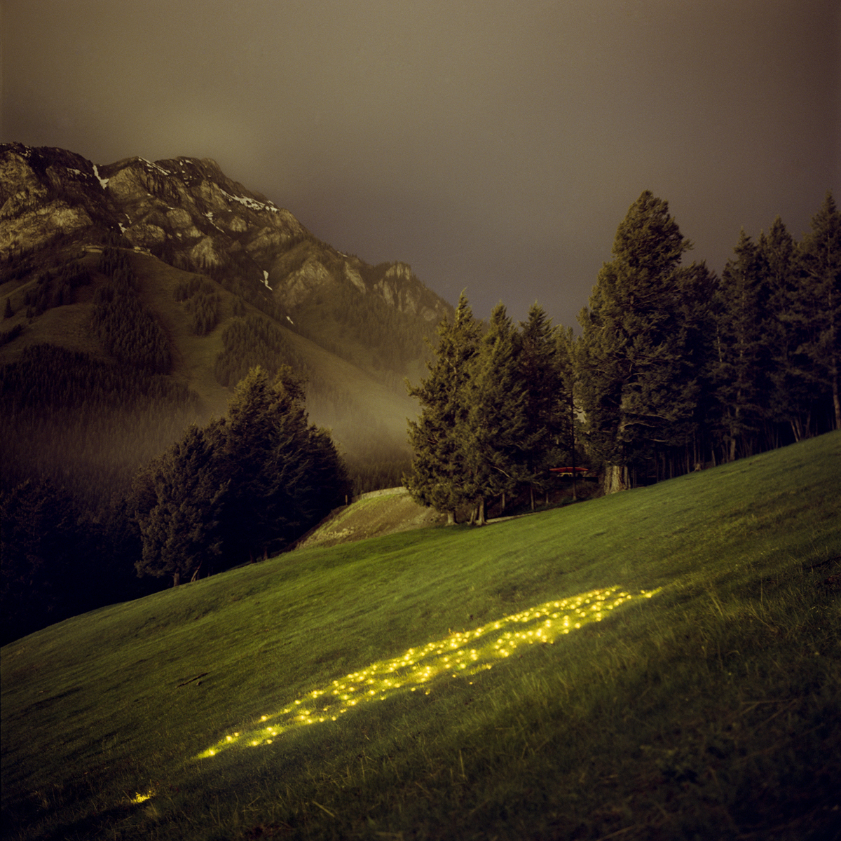 Norquey (Yellow)