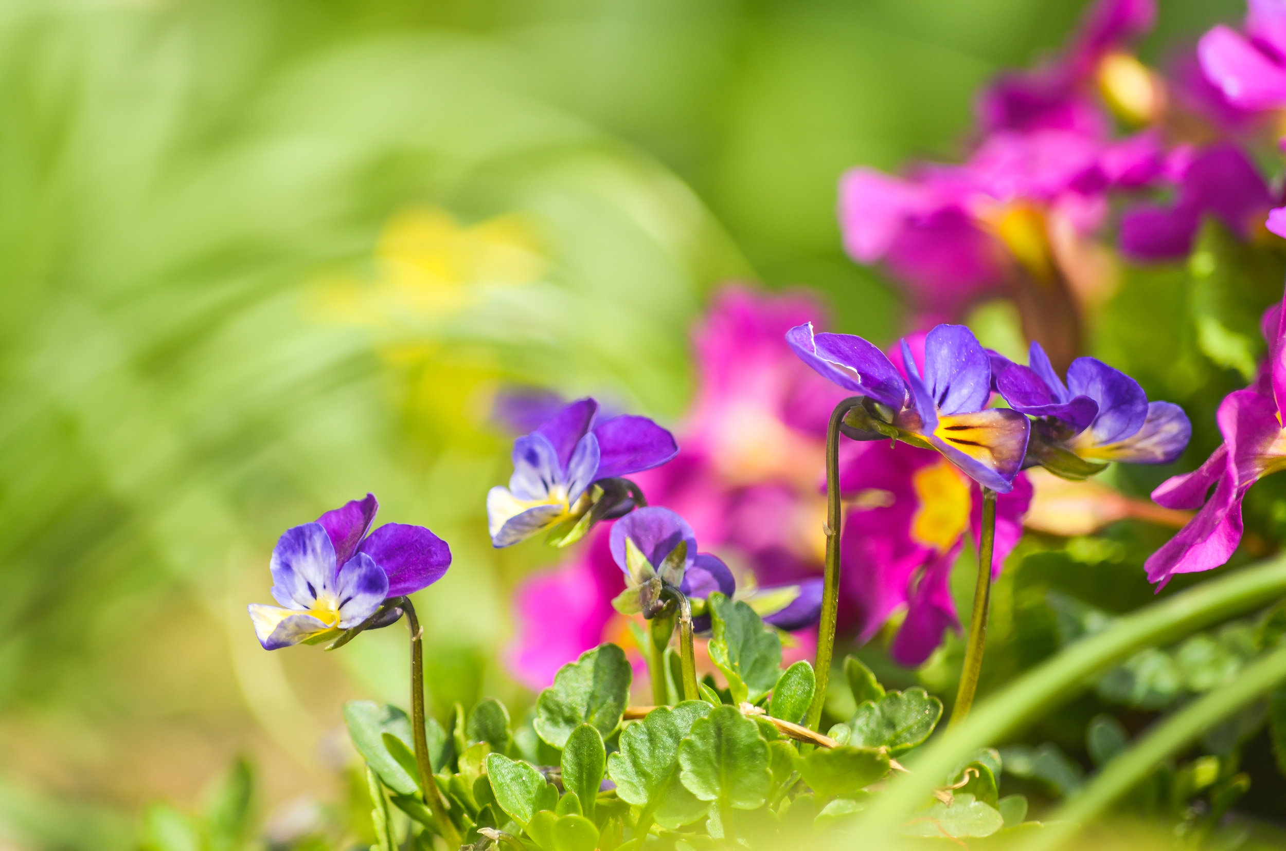 Purple-Flowers-8.jpg