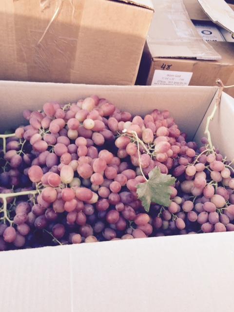 Helm Vineyards Red Flame Grapes Oct 2015.jpg