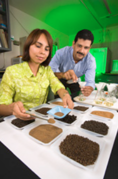 Technicians Veronica Guzman (left) and Rene Martinez process soil samples for organic matter analysis. Soils from the organic orchard have more organic matter and microbial activity than those from the conventional pecan orchard.