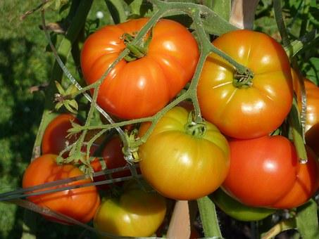 Heritage Tomatoes.jpg