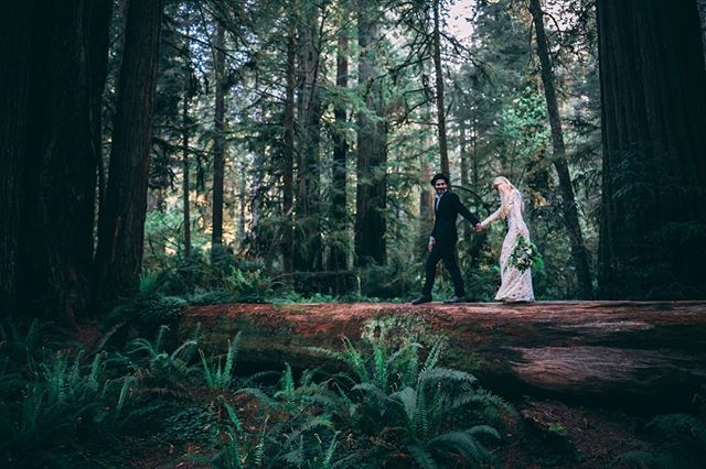 Have you ever fantasized about a dreamy green forest Wedding or Elopement? 🌲🌲🌲 . . Well no need to look any further, because we have just the spot you've been dreaming of. The Redwoods National & State parks offer incredible locations for small intimate Elopements to large scale full sha-bang weddings. All that's needed is a special use permit which is extremely affordable compared to most wedding venues these days. Don't stress, that's our motto, just enjoy the presence of nature with your loved one(s) 💕 . . . . . #radlovestories #shesaidyes  #DIRTYBOOTSANDMESSYHAIR #justalittleloveinspo  #anotherwildstory #oregonweddingphotographer #wanderingweddings #weddingwire #pnwweddings #elopementphotographer #nwweddings  #crazyinlove #folkfilm  #radstorytellers  #lookslikefilmweddings  #elopementcollective  #utahphotographer #theknot #muchlove_ig  #elopementlove #wanderingphotographer  #belovedstories  #LOVEANDWILDHEARTS #outdoorsyweddings #justsaidyes  #shesaidyes