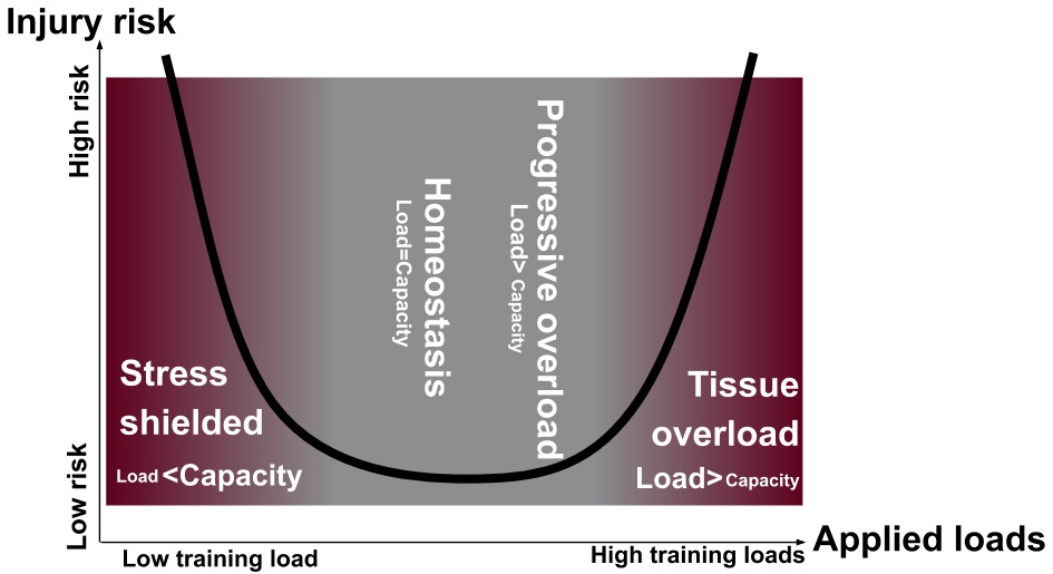 Figure 1: Tissue homeostasis model, as per Dye 2005 and recently updated by Gabbett 2016.  Key points: A) The runner will not be able to return to running without progressive overload to restore the envelope of function; B) Stress shielding the injured runner will increase the risk of re-injury as much as tissue overload.