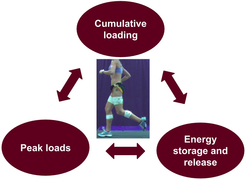 Figure 2: Three main components of loads experienced by the runner. Adapted from Willy & Meira 2016.
