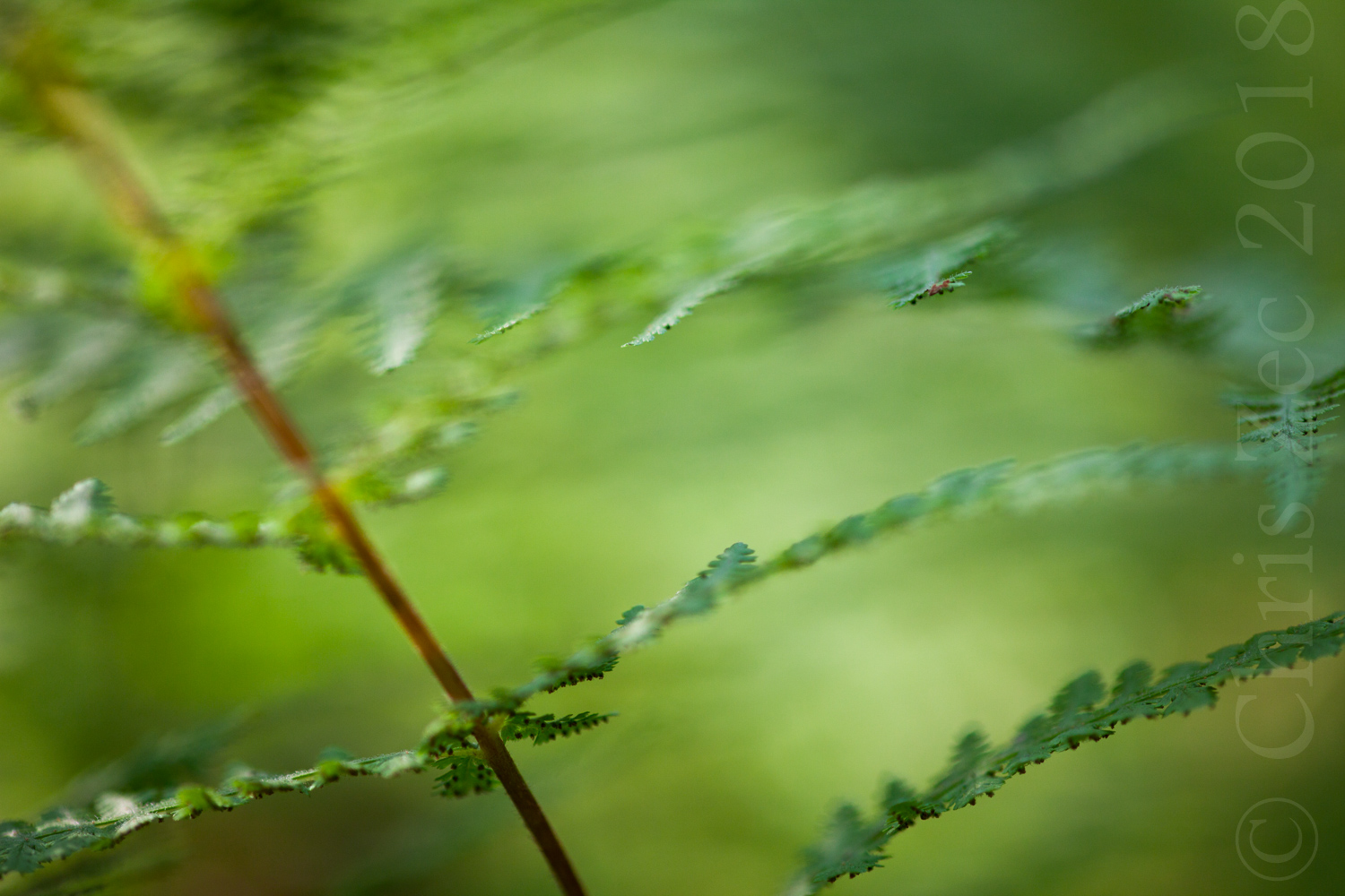 """Private residence - """"I love the ferns in my room, very soothing, just as they would be in nature."""" Dorothy R., NY"""