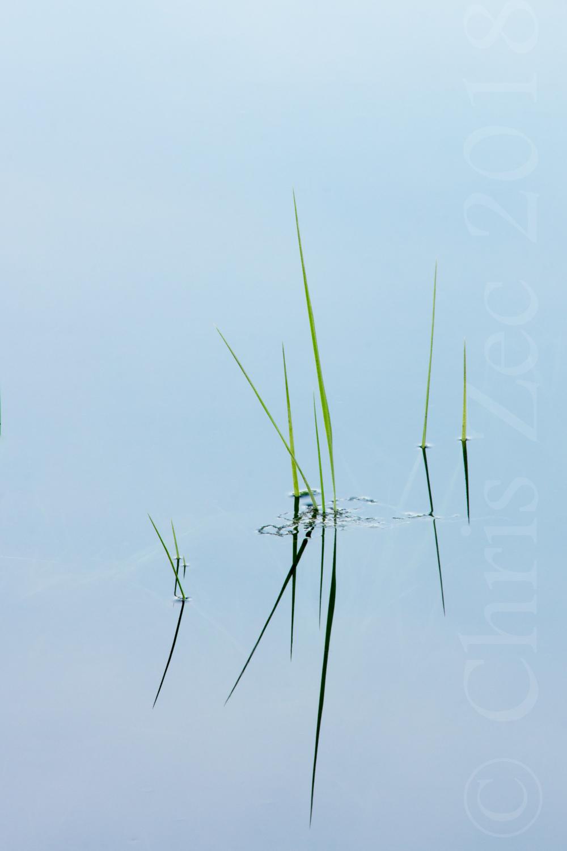 """Reed Reflections, No.3"", 2014"