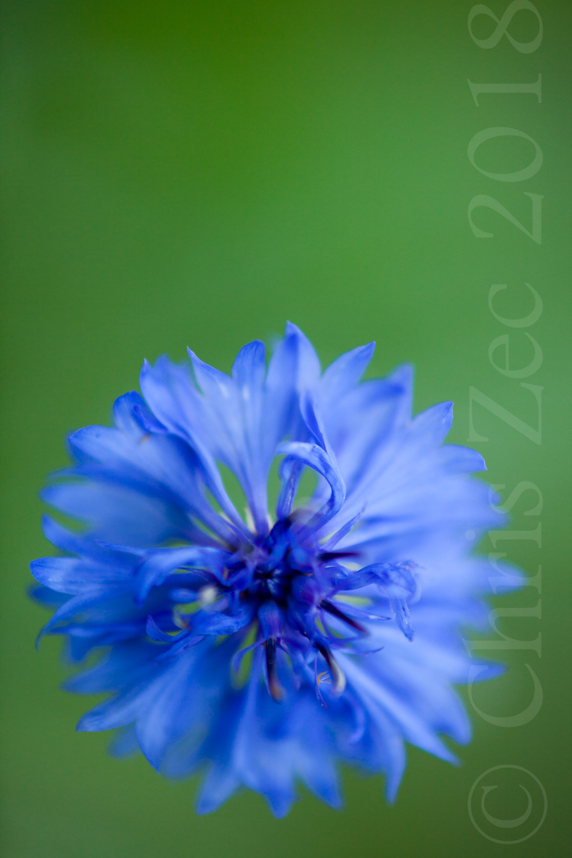 """Burst of Blue"", 2011"