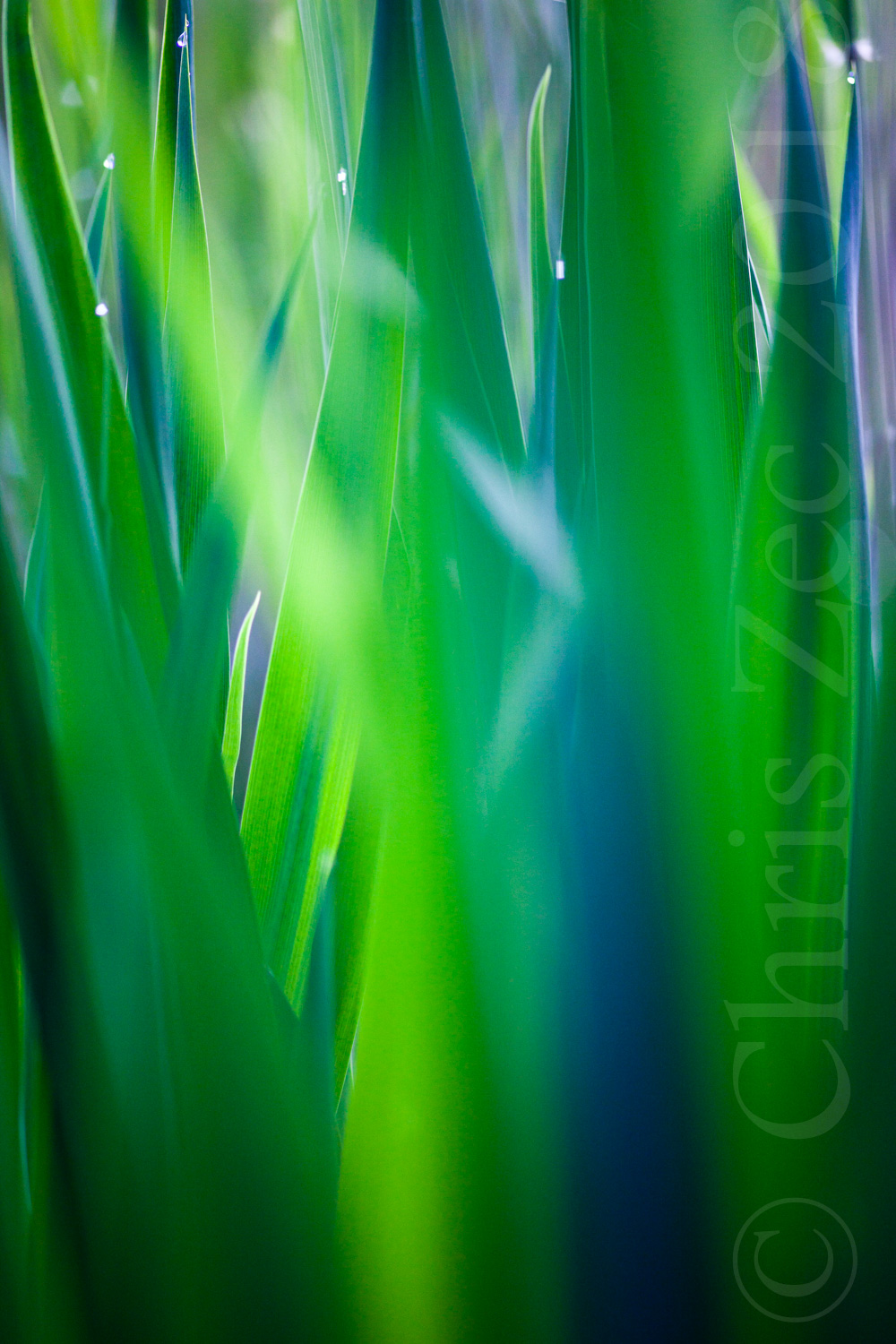 """Dew-dropped Grass, No.3"", 2011"