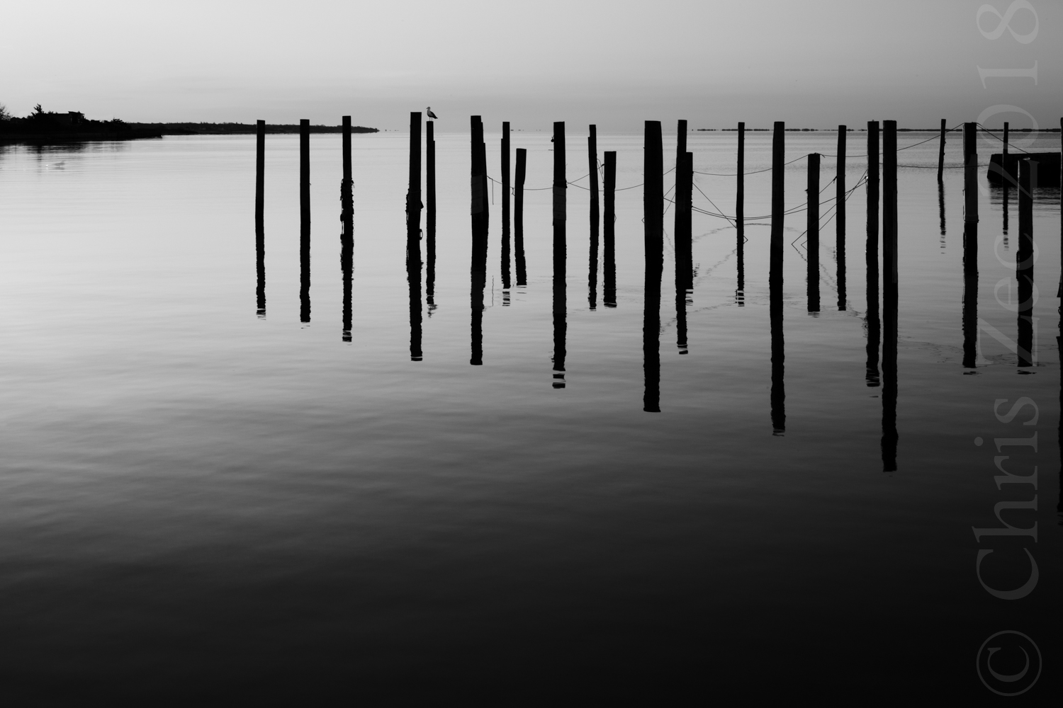 """Pilings in Grayscale"", 2011"