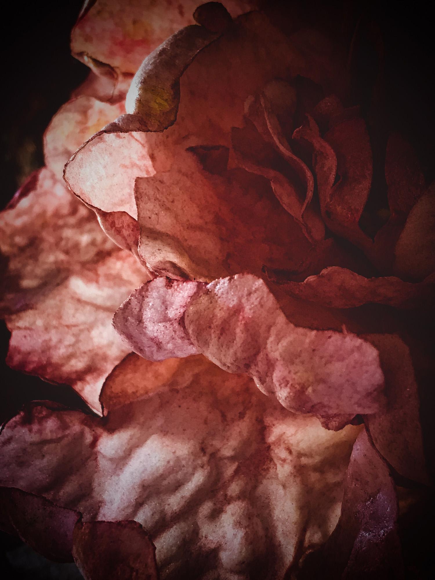Close up of sugar petals