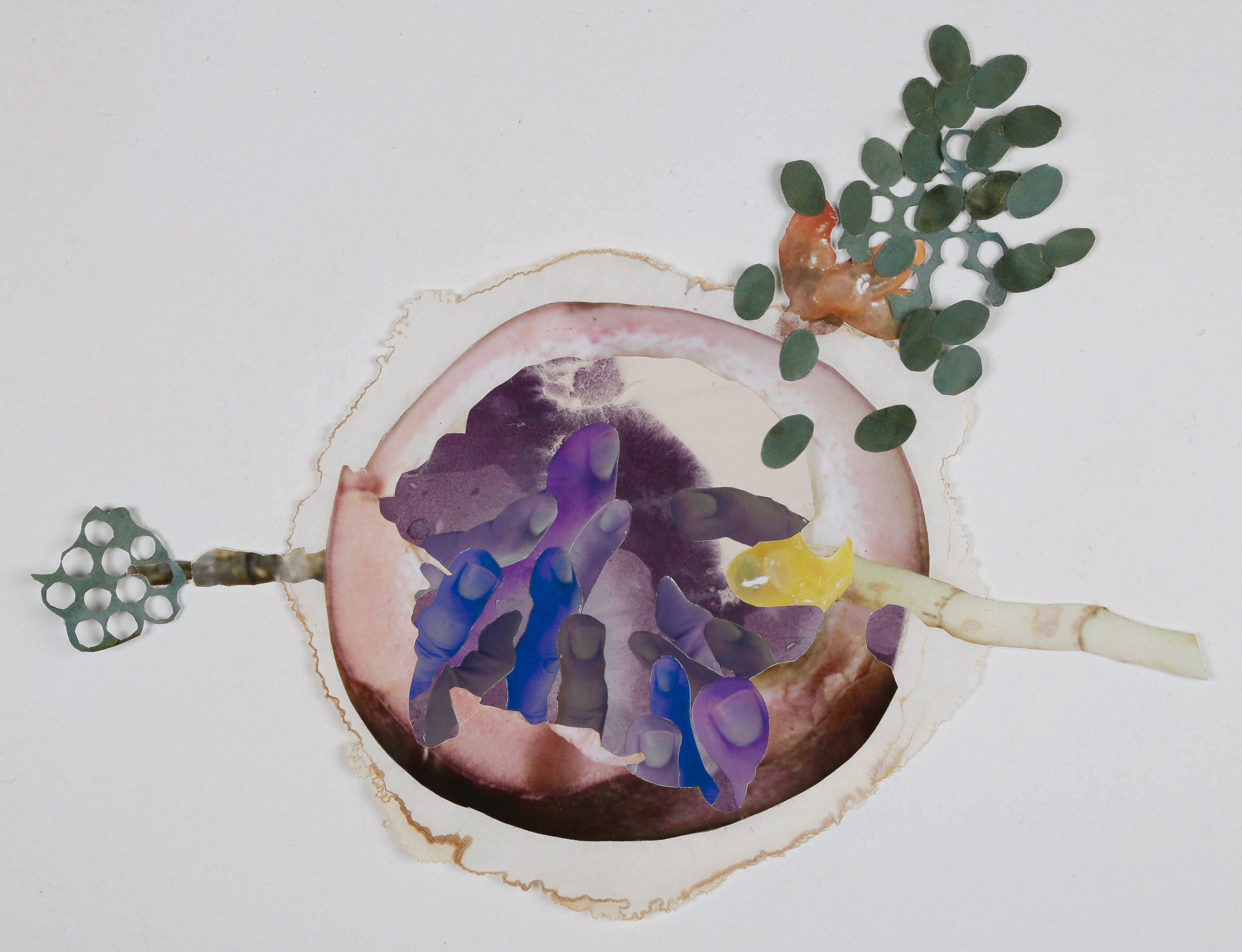 Violet Roundworm
