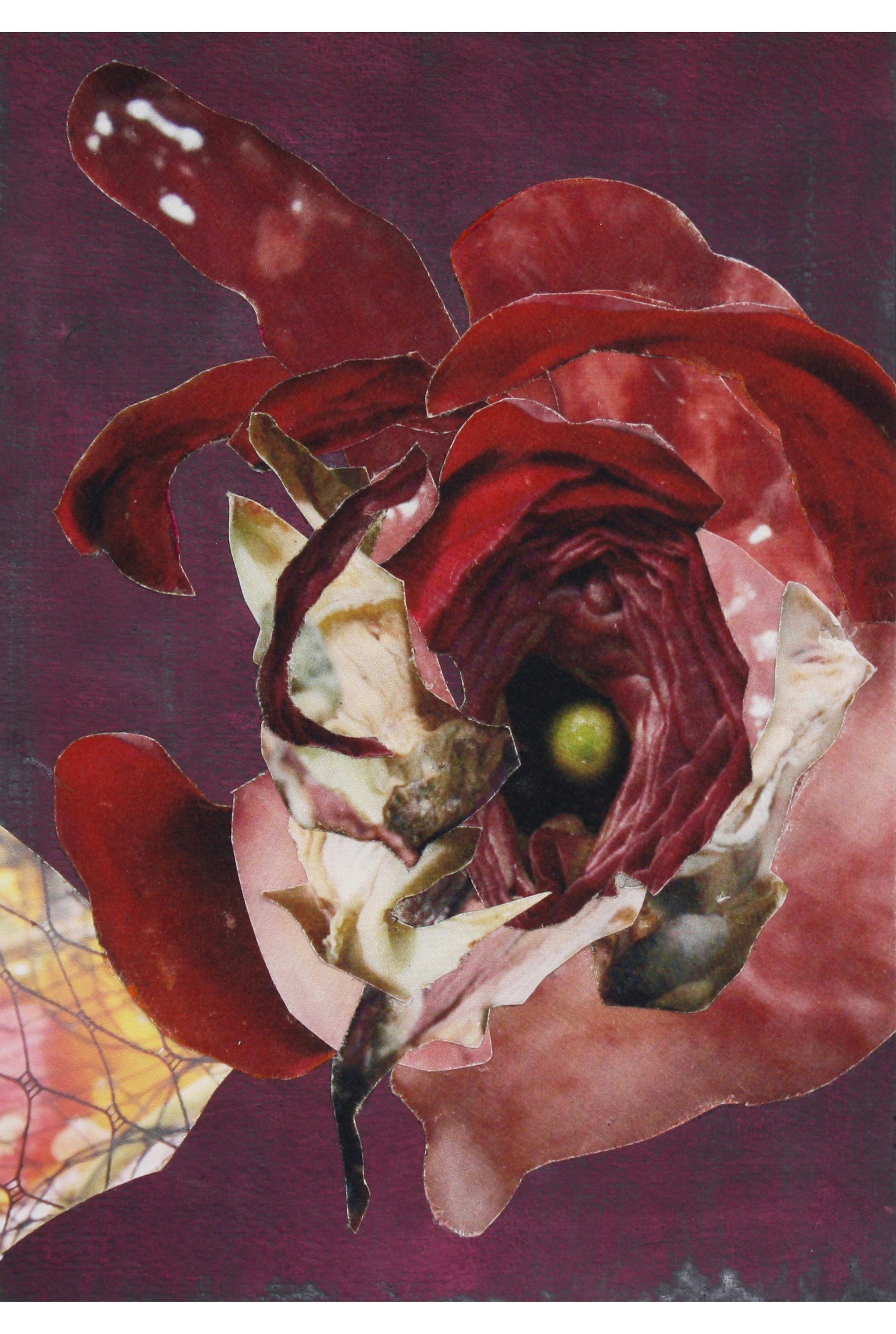Simultaneous Ranunculus Protrusion