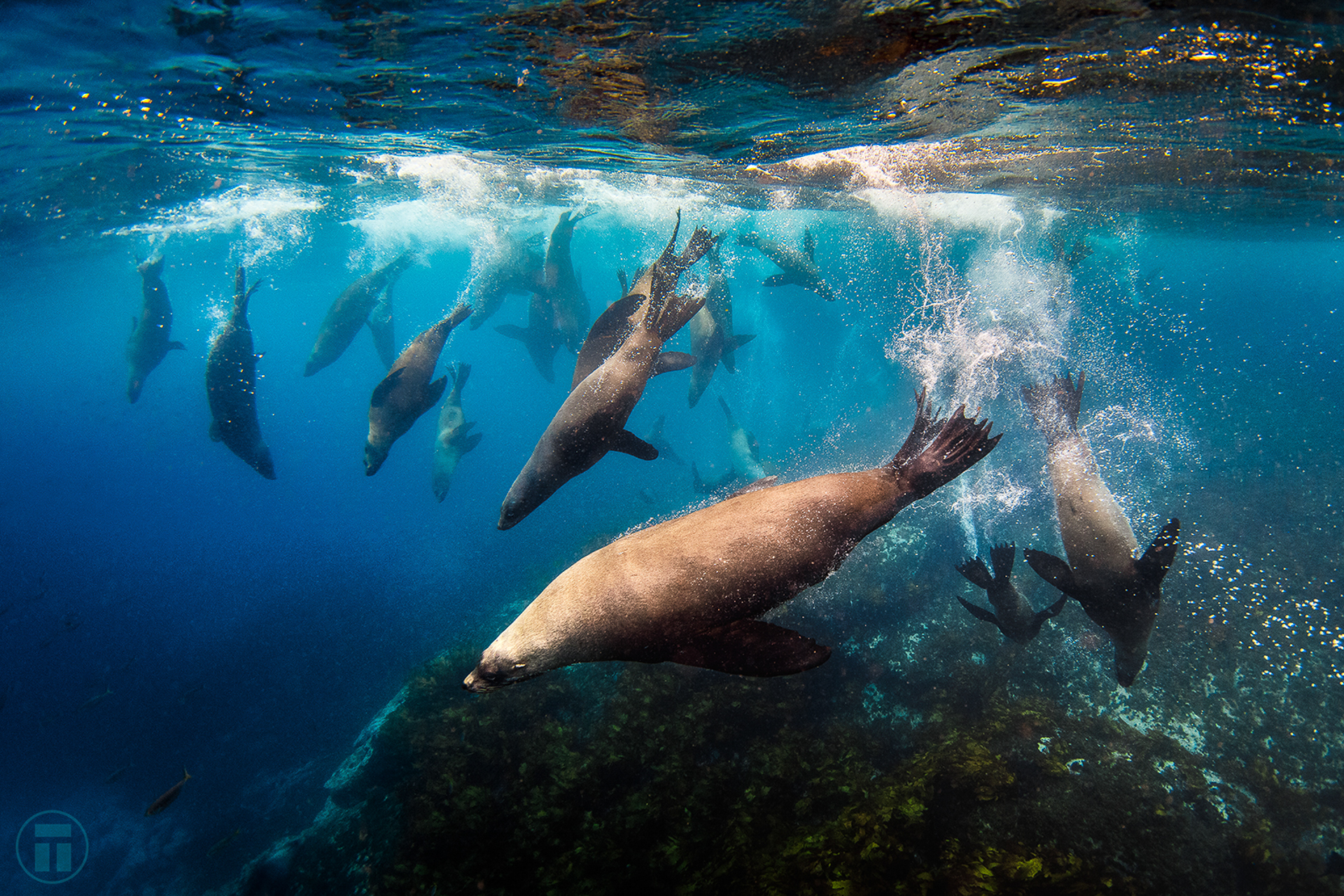 Hang out with playful seals