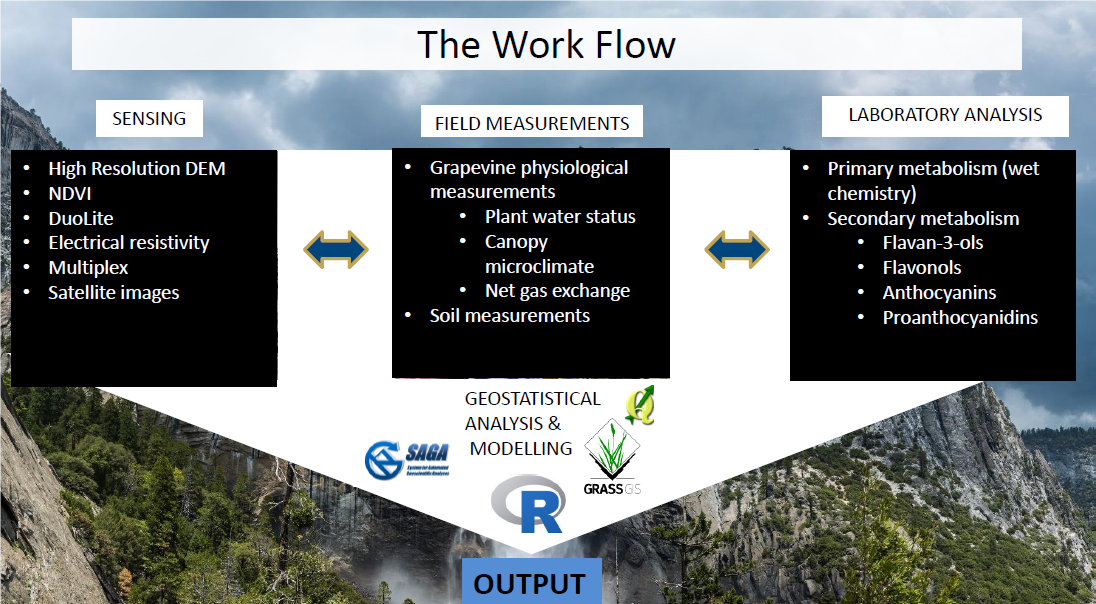 Figure 2. The workflow employed in the differential management trials across California (Figure credit: Brillante et al. 2016).