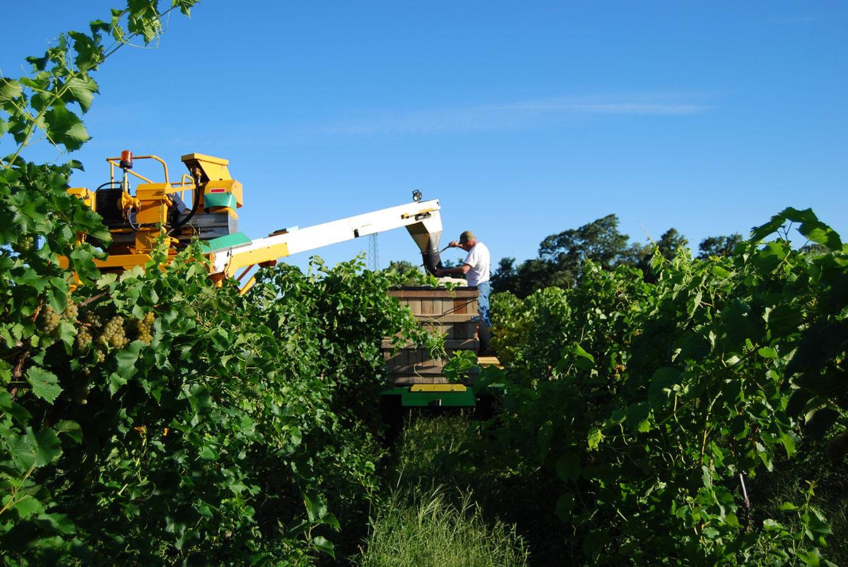 About - Find out about the Efficient Vineyard,our mission, our methods, and the results of our years of research.